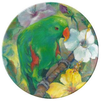 Loro masculino verde de Eclectus Platos De Cerámica