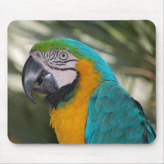 Loro Mousepad del Macaw del azul y del oro