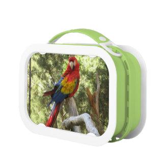 Loro rojo del Macaw