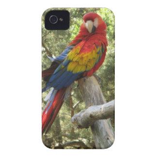 Loro rojo del Macaw iPhone 4 Carcasas