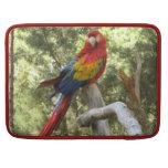 Loro rojo del Macaw Funda Macbook Pro