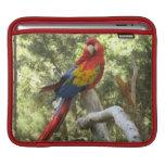 Loro rojo del Macaw Funda Para iPads