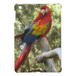 Loro rojo del Macaw iPad Mini Coberturas