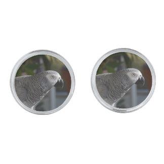 Loro sereno del gris africano gemelos plateados