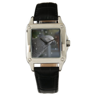 Loro sereno del gris africano relojes de mano