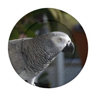 Loro sereno del gris africano paquete pequeño de tapabotones