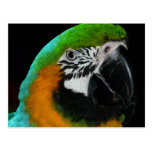Loro verde colorido tarjeta postal