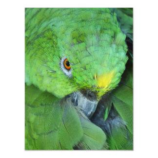 Loro verde del Amazonas Invitaciones Magnéticas