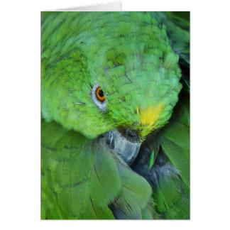 Loro verde del Amazonas Tarjeta De Felicitación