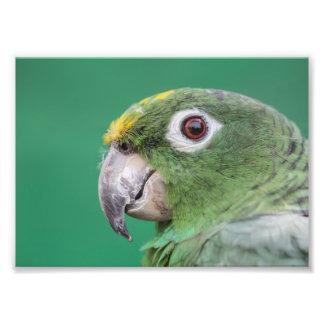 Loro verde fotografías