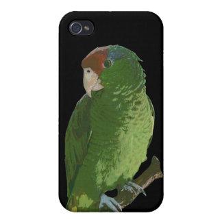 Loro verde iPhone 4 protectores