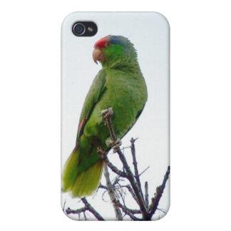 Loro verde lindo 4 4S iPhone 4 Protector