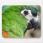 Loro verde Mousepad Alfombrilla De Ratones
