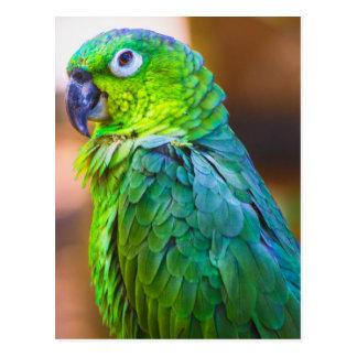 Loro verde tarjeta postal