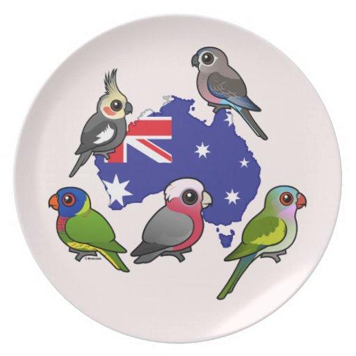 Loros australianos platos de comidas