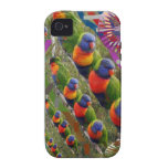 Loros del amor de los NIÑOS Case-Mate iPhone 4 Fundas