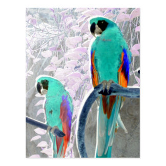 Loros del hielo tarjetas postales