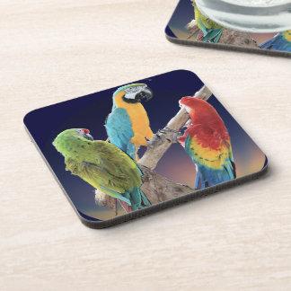 Loros del Macaw Posavasos