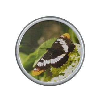Lorquin's Admiral butterfly speaker
