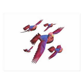 Lorys rojo y azul postales