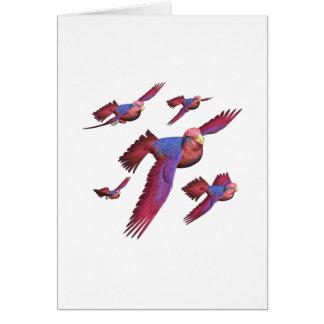 Lorys rojo y azul tarjeta de felicitación
