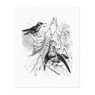 Los 1800s del vintage empenacharon los pájaros ret impresiones en lona