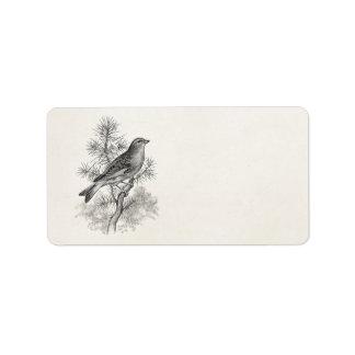 Los 1800s del vintage subió pájaros del pinzón del etiquetas de dirección