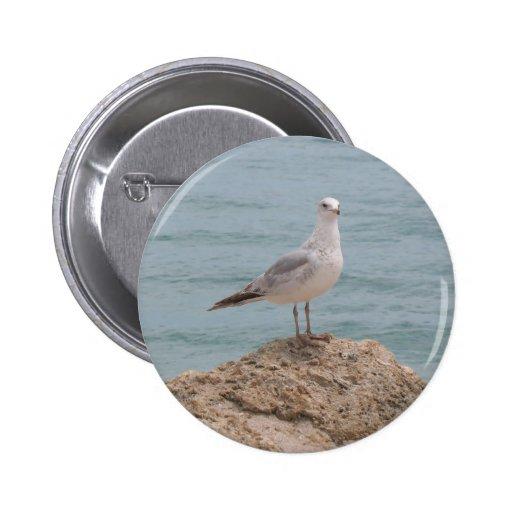 Los 2134) botones solitario de la gaviota ( pins