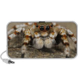 Los accesorios impresionantes de salto de la araña PC altavoces