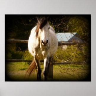 Los acercamientos del caballo blanco impresiones