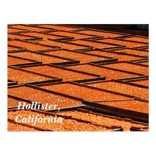 Los albaricoques famosos de Hollister, California Tarjeta Postal