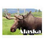 Los alces acercan a Anchorage, Alaska, los Postales