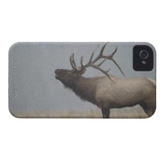 Los alces de Bull en nieve asaltan la llamada, bug iPhone 4 Case-Mate Cobertura