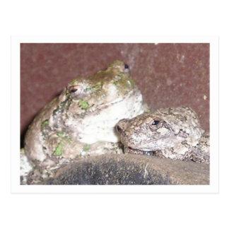 Los amigos de Froggie enmarcaron la tarjeta de Postales