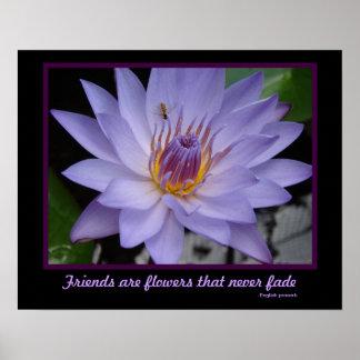 Los amigos son lirio de agua púrpura de la amistad posters