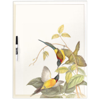 Los animales de la fauna de los pájaros de Sunbird Pizarras Blancas