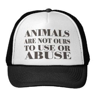 Los animales no son los nuestros a utilizar o a ab gorra