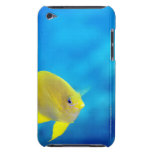 Los anthias de Bartlett iPod Case-Mate Cárcasas