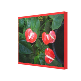 Los Anthurium rojos envolvieron la lona Impresion En Lona