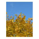 Los árboles brillantes del otoño en ciudad tarjeta postal