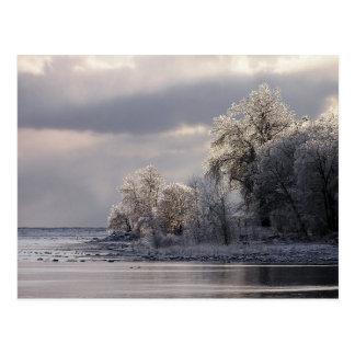 Los árboles cristalinos refrescan la postal de la