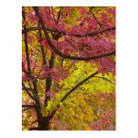 Los árboles de arce exhiben verde rojo vibrante de postales