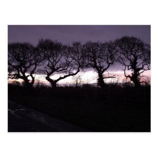 Los árboles de la danza honrada postales