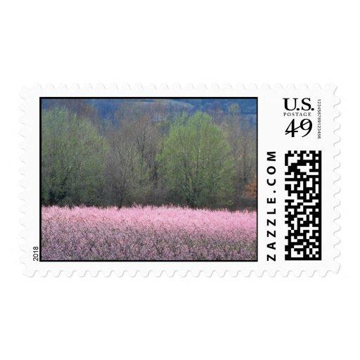 Los árboles de melocotón florecientes rosados en sellos