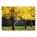 Los árboles del otoño en Vichy saltan centro turís Tarjeta De Felicitación