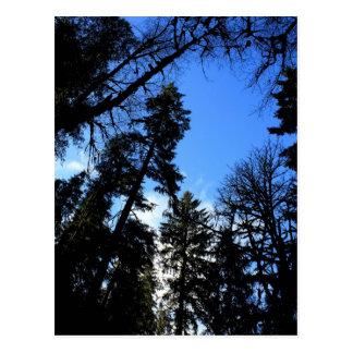 Los árboles elevados acercan a la postal de la cal