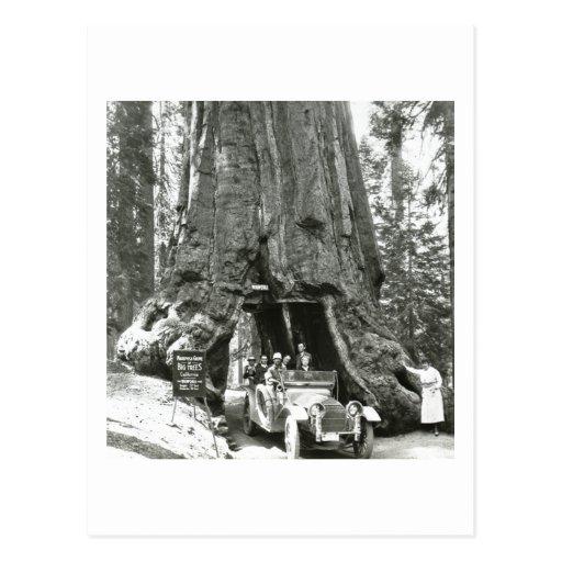 Los árboles grandes de la arboleda de Mariposa Postal