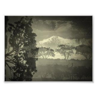 Los árboles I ven Cojinete