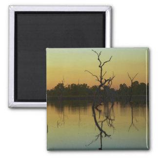 Los árboles muertos reflejaron en la laguna de la  imán cuadrado