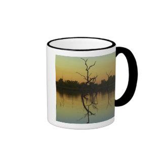 Los árboles muertos reflejaron en la laguna de la  tazas